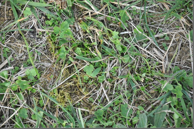 biran soil