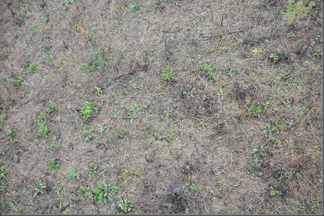 daniel soil