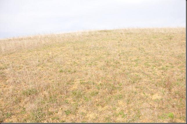Blanc pasture