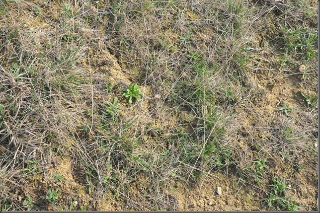 Blanc soil