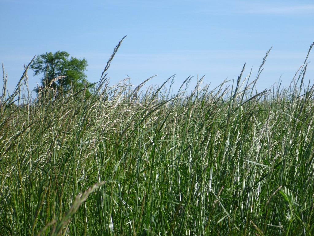 wormvana grasspunk