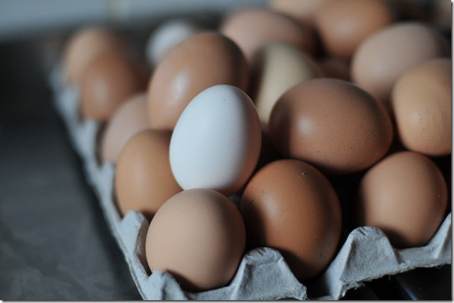 bresse egg