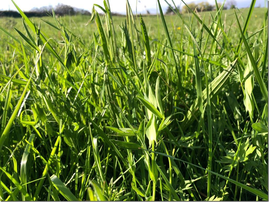 grass tri